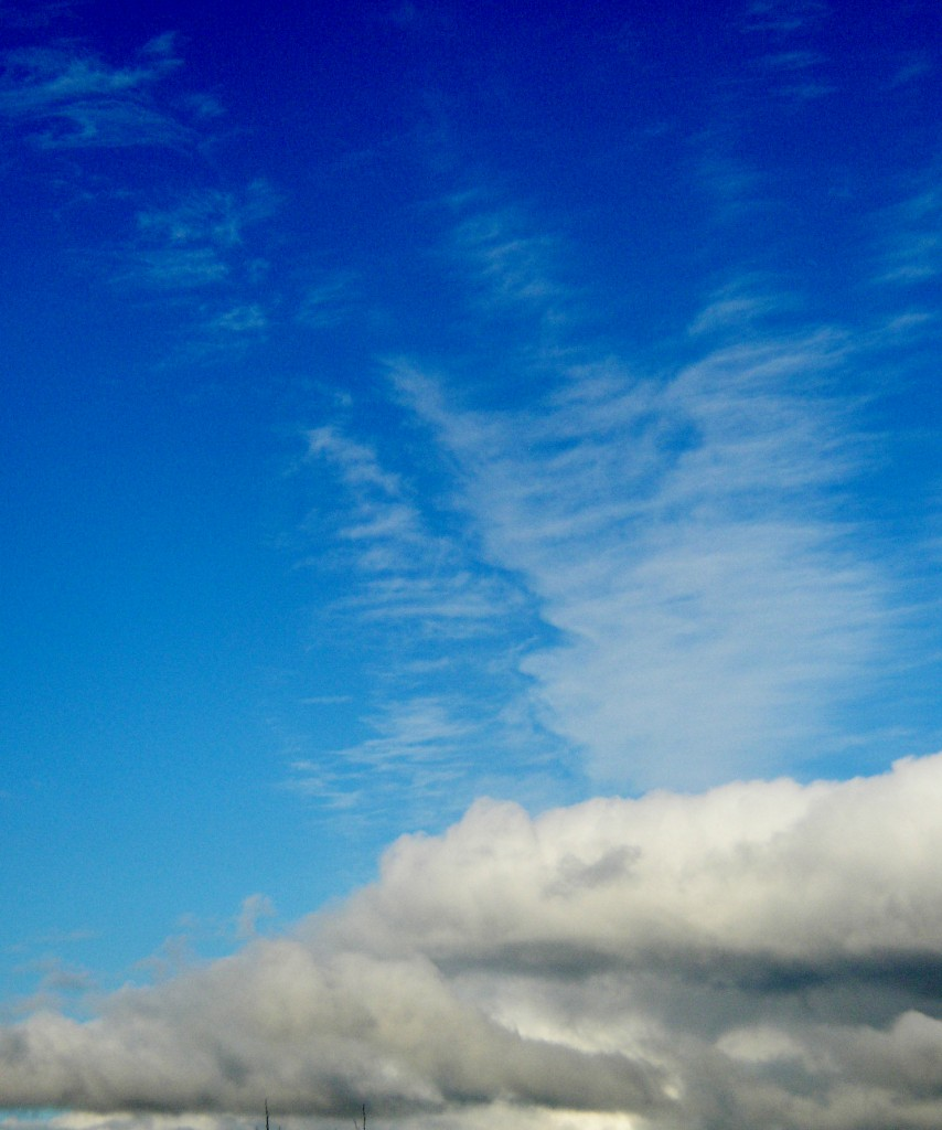ciiell